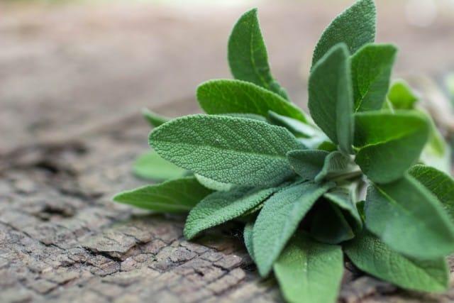 La Salvia, proprietà, benefici e usi