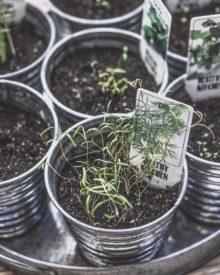 I benefici delle erbe aromatiche per il tuo benessere
